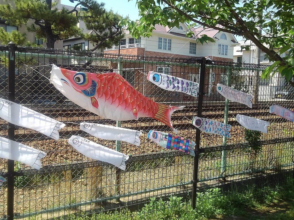 緋鯉や子どもの鯉