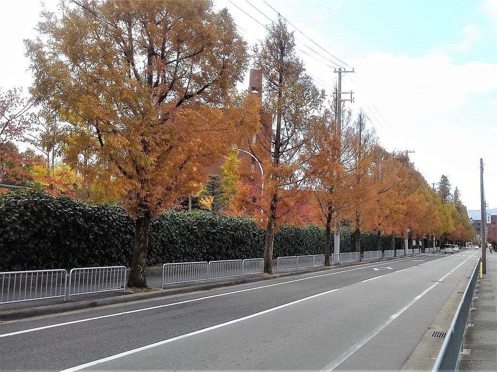 北側道路の並木