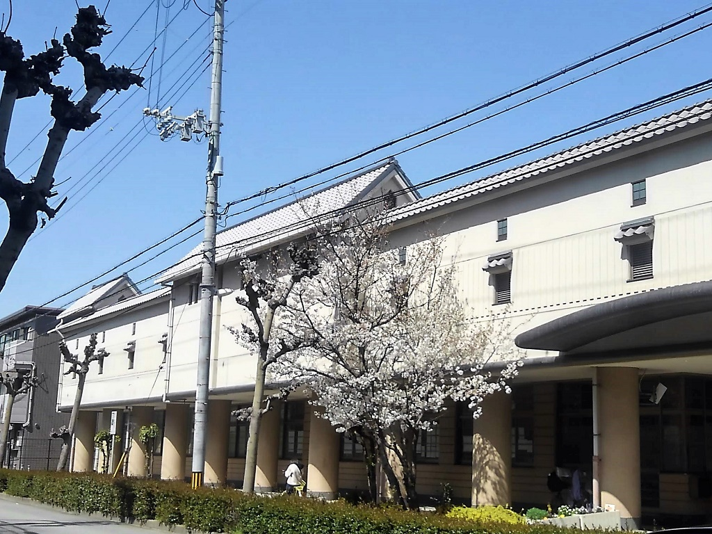 今津小の桜
